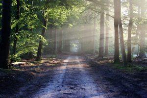Lanscape road